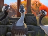 duck-duck-goose-13