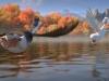 duck-duck-goose-2