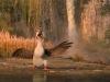 duck-duck-goose-36