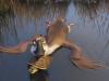 duck-duck-goose-5