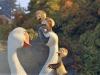 duck-duck-goose-70