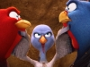 xfree-birds-photo-jpg-pagespeed-ic_-ijjmdweaqa